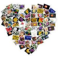 Download-FigrCollage-3-for-Mac-200x200
